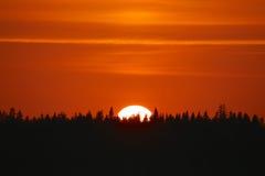 Puesta del sol de oro sobre una silueta del bosque Fotografía de archivo libre de regalías