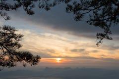 Puesta del sol de oro a través de ramas del pino imagenes de archivo