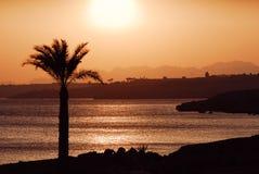 Puesta del sol de Palmtree foto de archivo libre de regalías