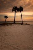 Puesta del sol de Panama City con las palmeras Imagen de archivo libre de regalías