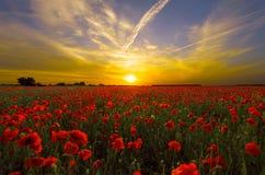 Puesta del sol de Poppy Garden Imagen de archivo