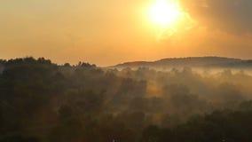 Puesta del sol de Timelapse sobre el cocido al vapor del bosque al vapor después de la lluvia metrajes