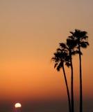 Puesta del sol de tres palmas Imágenes de archivo libres de regalías