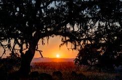 Puesta del sol debajo de la rama de un roble Fotos de archivo libres de regalías