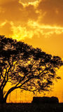 Puesta del sol del árbol Imagenes de archivo