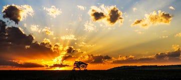 Puesta del sol del árbol de África Fotos de archivo