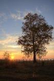 Puesta del sol del árbol de abedul Fotografía de archivo libre de regalías