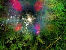 Puesta del sol del árbol de pino Imagenes de archivo