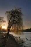 Puesta del sol del árbol de sauce Imagen de archivo