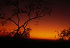Puesta del sol del acacia Fotos de archivo libres de regalías
