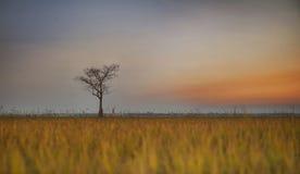 puesta del sol del Arroz-campo Imagenes de archivo