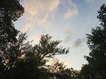 Puesta del sol del arte de los árboles imagenes de archivo