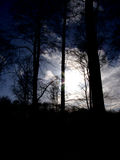 Puesta del sol del bosque imágenes de archivo libres de regalías