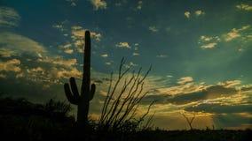 Puesta del sol del cactus del Saguaro metrajes