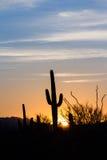 Puesta del sol del cactus del Saguaro Fotografía de archivo
