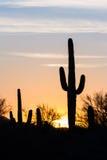 Puesta del sol del cactus del Saguaro Fotos de archivo