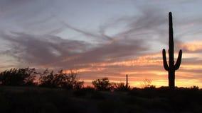 Puesta del sol del cactus del Saguaro en primavera almacen de metraje de vídeo