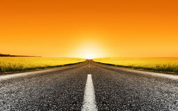 Puesta del sol del camino de Canola Imagen de archivo
