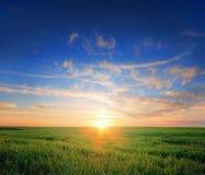 Puesta del sol del campo de hierba Fotografía de archivo