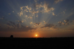 Puesta del sol del campo de maíz Fotos de archivo libres de regalías
