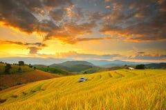 Puesta del sol del campo de maíz de Tailandia Imagen de archivo libre de regalías