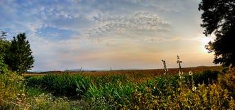 Puesta del sol del campo de maíz a tiempo Imagenes de archivo