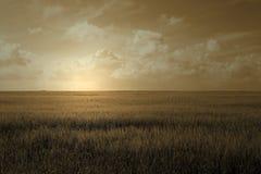 Puesta del sol del campo de trigo Fotografía de archivo