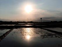Puesta del sol del campo del arroz Fotografía de archivo libre de regalías