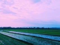 Puesta del sol 3 del campo del arroz Fotos de archivo libres de regalías