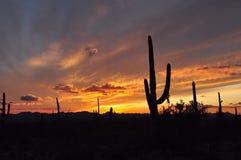 Puesta del sol del desierto con venir de la tormenta Fotos de archivo