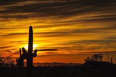 Puesta del sol del desierto de Arizona Senoran Imagen de archivo libre de regalías