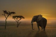 Puesta del sol del elefante Fotos de archivo
