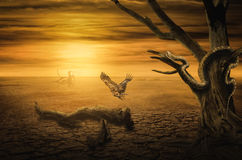 Puesta del sol del fondo en el desierto