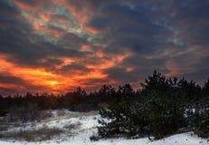 Puesta del sol del invierno con un cielo ardiente en un bosque del pino Imagen de archivo libre de regalías