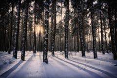 Puesta del sol del invierno en el bosque Imagenes de archivo