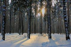 Puesta del sol del invierno en el bosque Imagen de archivo libre de regalías