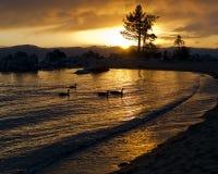 Puesta del sol del lago con la silueta y los patos Imagen de archivo
