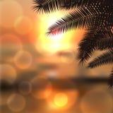 Puesta del sol del mar con las hojas y la luz del palmtree en la lente Imágenes de archivo libres de regalías