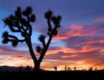 Puesta del sol del Mojave Imagen de archivo
