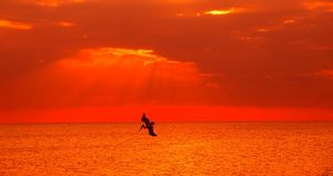 Puesta del sol del océano Imagen de archivo