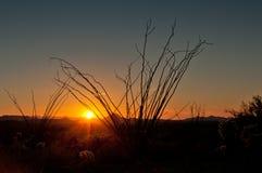 Puesta del sol del Ocotillo imagenes de archivo