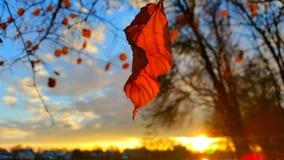 Puesta del sol del otoño imagen de archivo libre de regalías