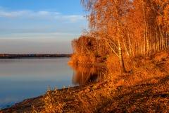 Puesta del sol del otoño del lago de la arboleda del abedul Foto de archivo