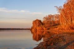 Puesta del sol del otoño del lago de la arboleda del abedul Fotos de archivo