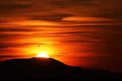 Puesta del sol del pájaro Foto de archivo libre de regalías