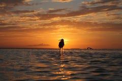 Puesta del sol del pájaro Imagen de archivo