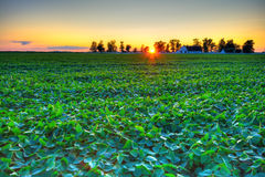 Puesta del sol del país Foto de archivo libre de regalías