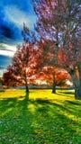 Puesta del sol del parque Foto de archivo libre de regalías