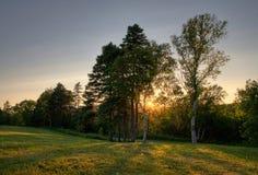 Puesta del sol del parque de los árboles de abedul Imágenes de archivo libres de regalías