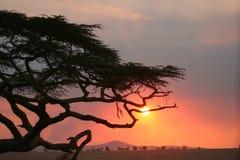 Puesta del sol del árbol de Afrika Imagen de archivo libre de regalías